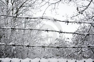 snow-covered-barb-wire-fence-12653362