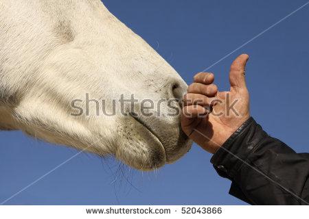 hand white horse